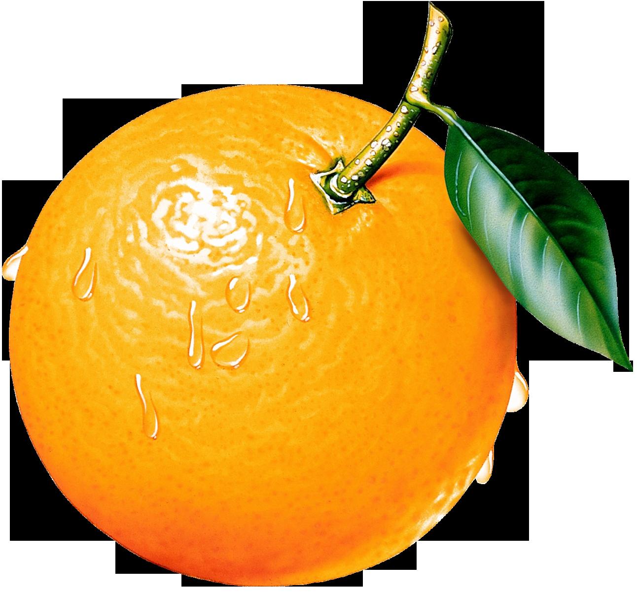 Free Fruit Orange Cliparts, Download Free Clip Art, Free.