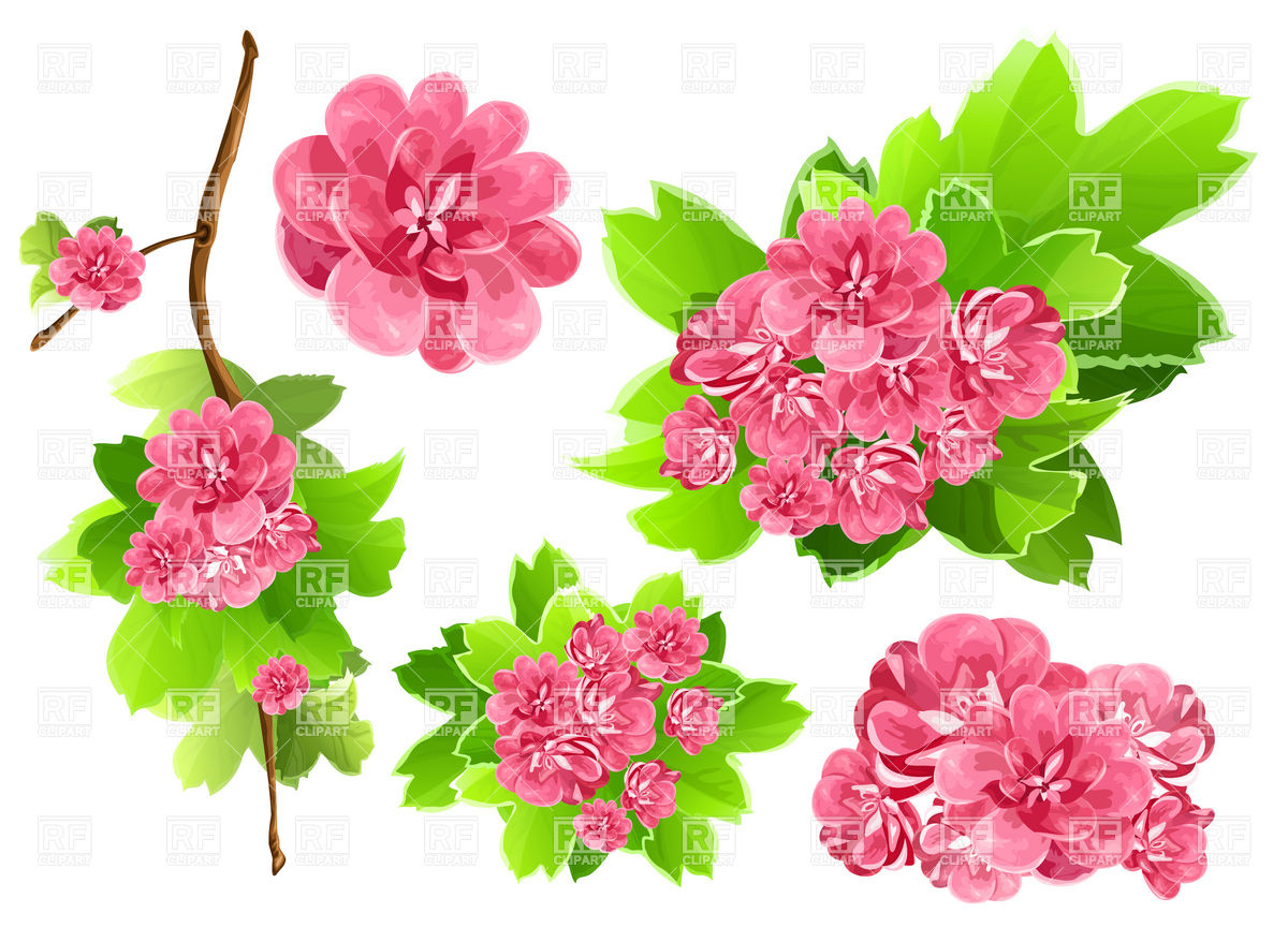 Pink spring flower clipart.