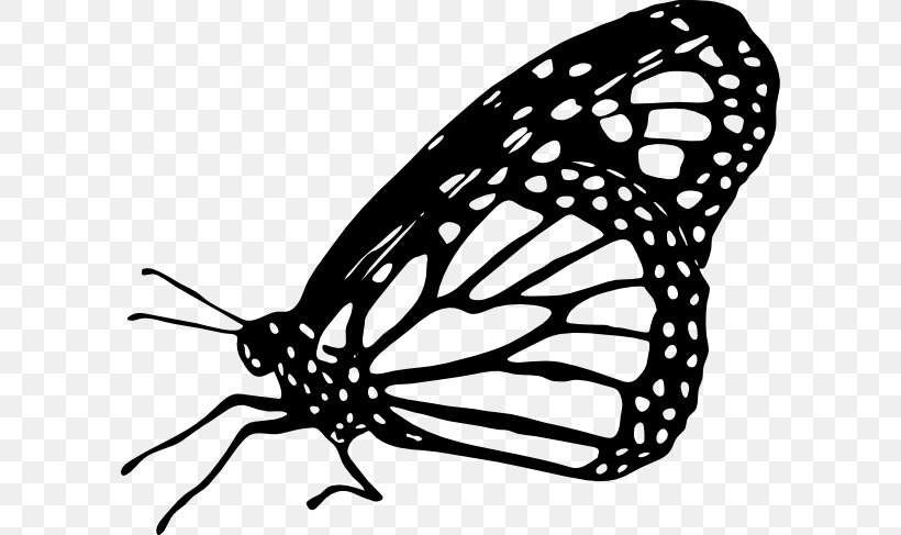 Monarch Butterfly Drawing Clip Art, PNG, 600x487px.