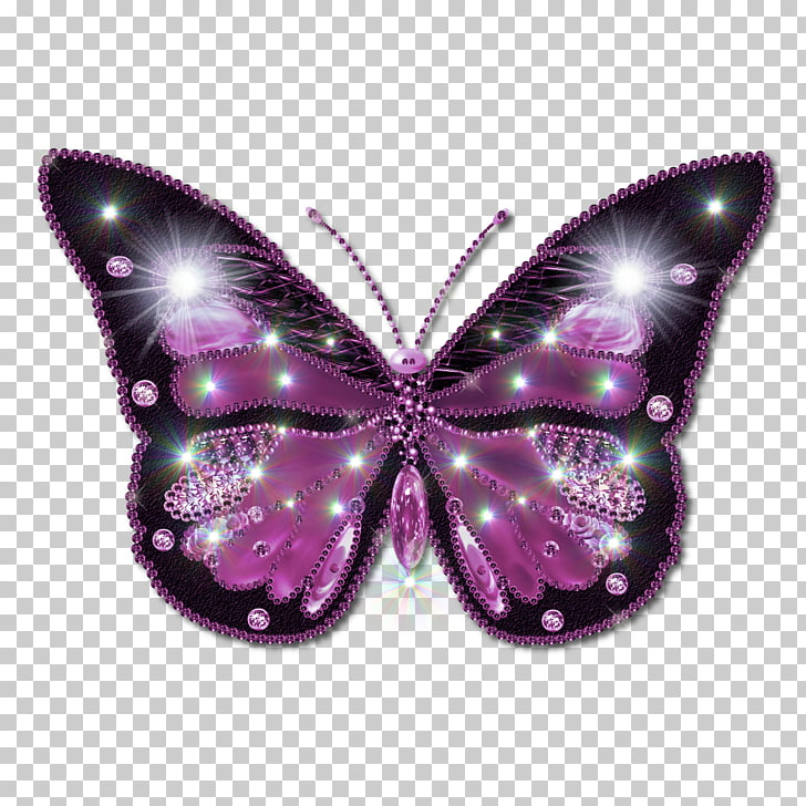 Butterfly PNG clipart.