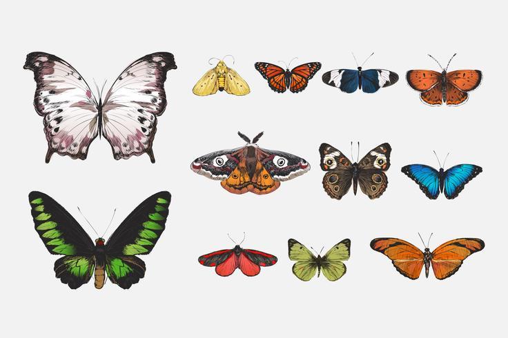 Various butterflies set.