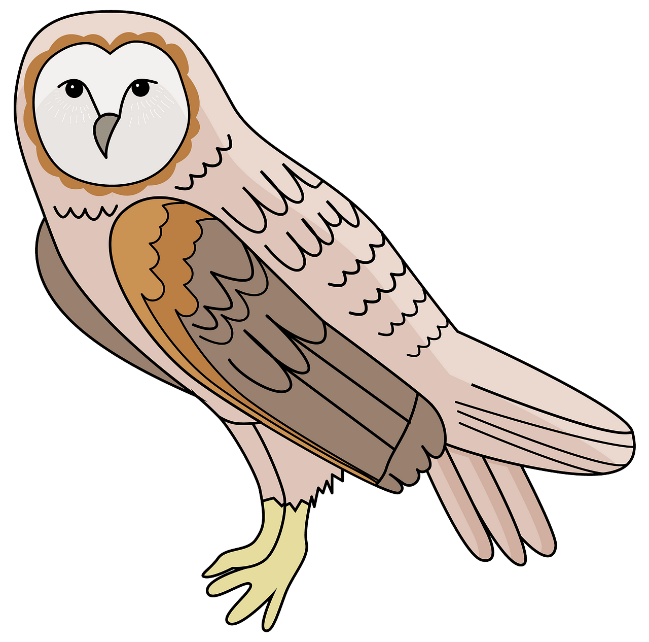 Barn Owl clipart. Free download..