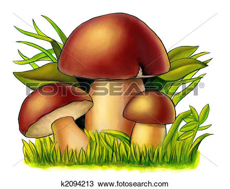 Drawing of Mushrooms k2094213.