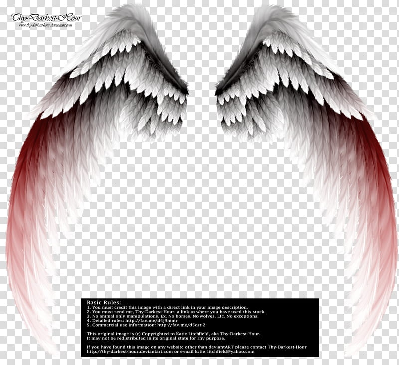 Arch Angel Wings Red Tinge, white and gray wings.