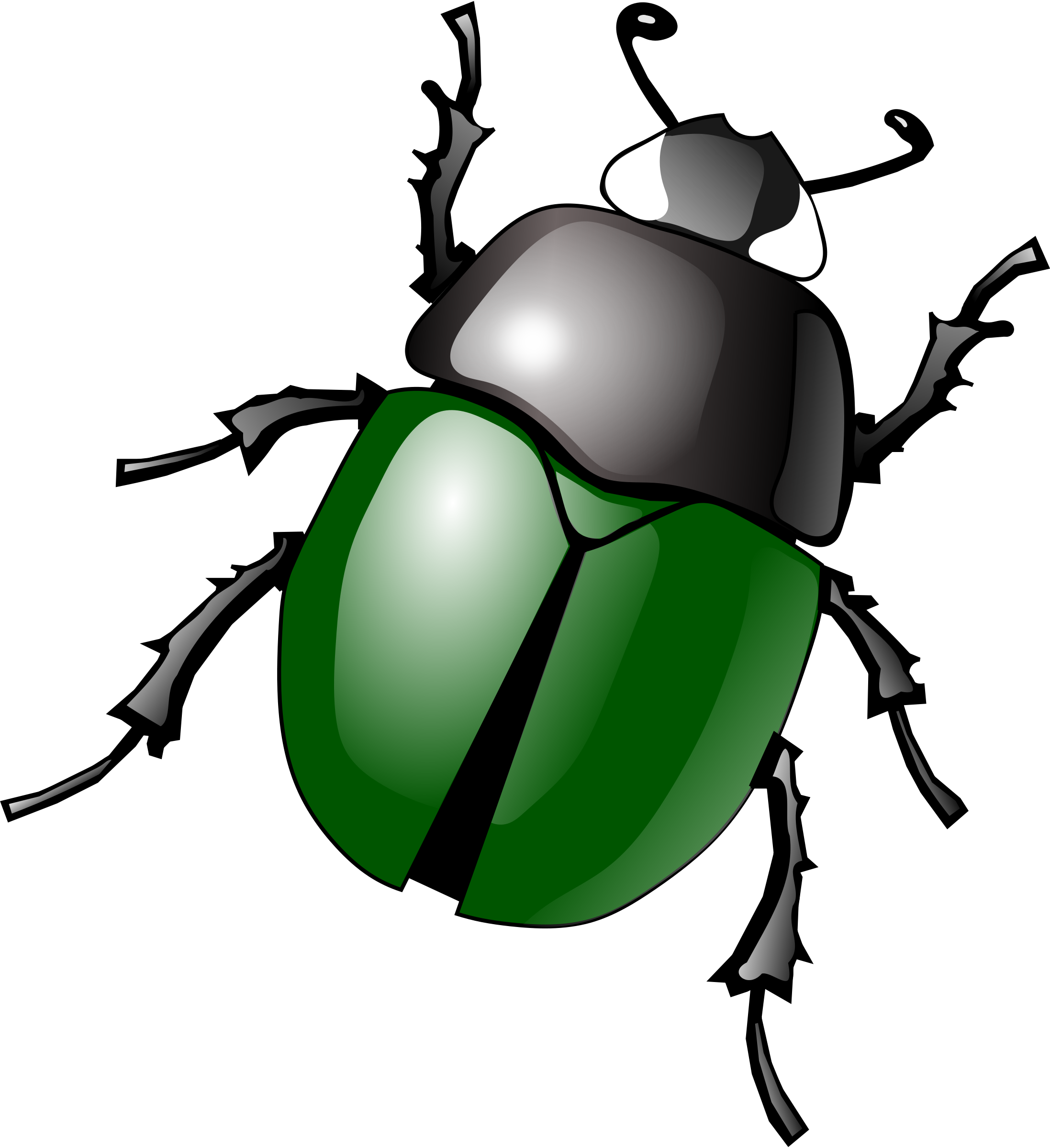 Bug clipart png 1 » PNG Image.