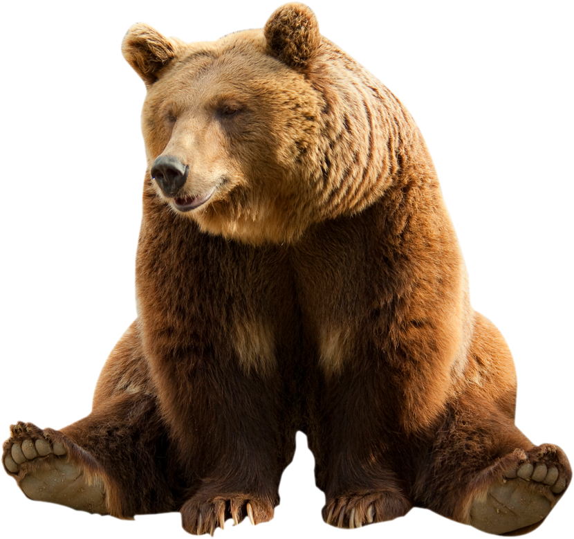 Brown bear Clip art.