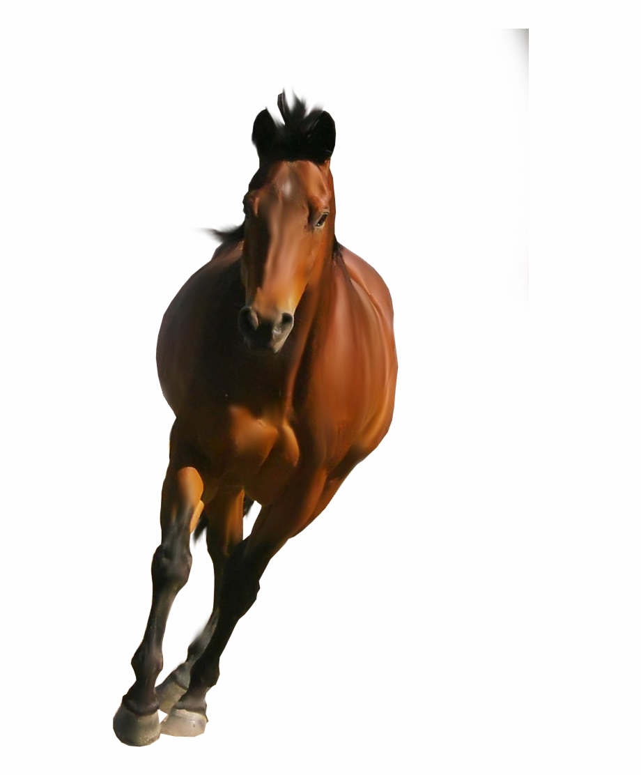 Clipart Brown Horse Png Image, Free Download Picture.