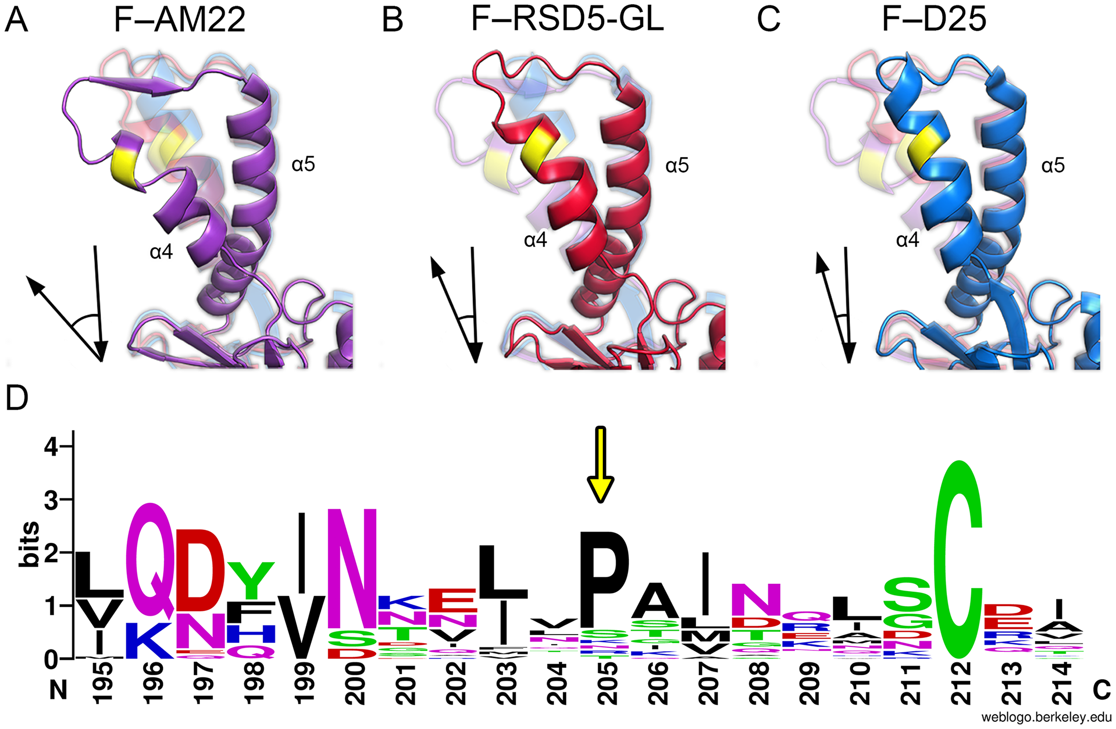 Alternative conformations of a major antigenic site on RSV F.