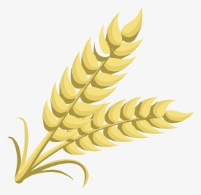 Grain, HD Png Download , Transparent Png Image.