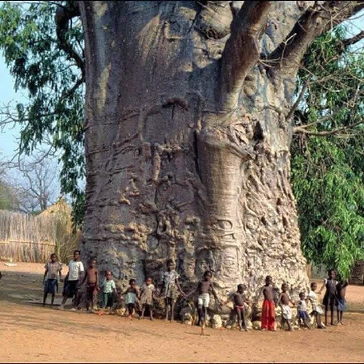 1000+ images about Trees ~ Flowers ~ Plants on Pinterest.
