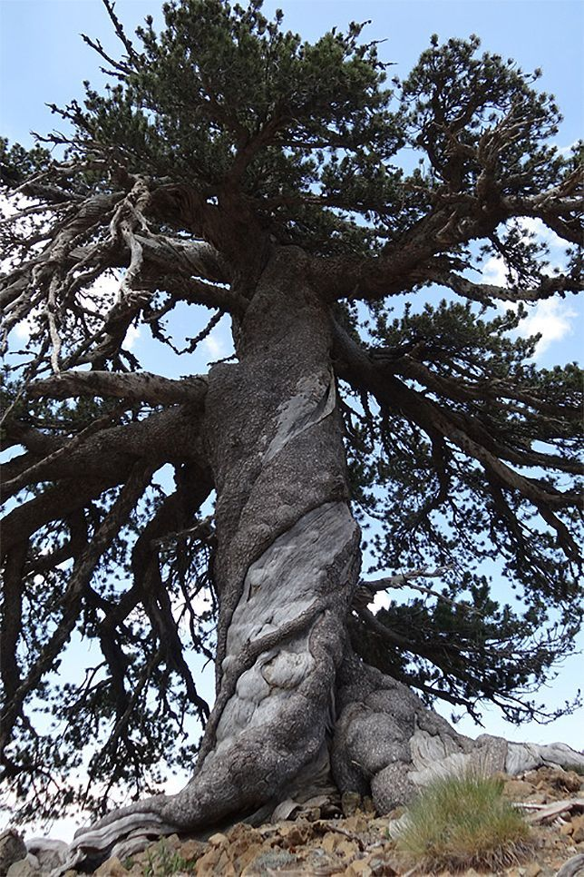 1000+ images about Cool Trees on Pinterest.