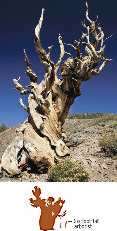 Focus: California has several world record.