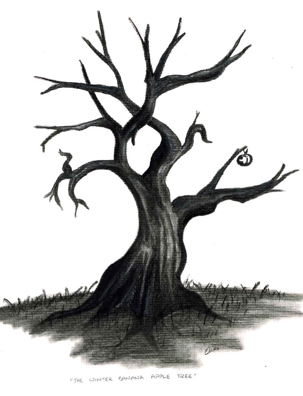 The Winter Banana Apple Tree..