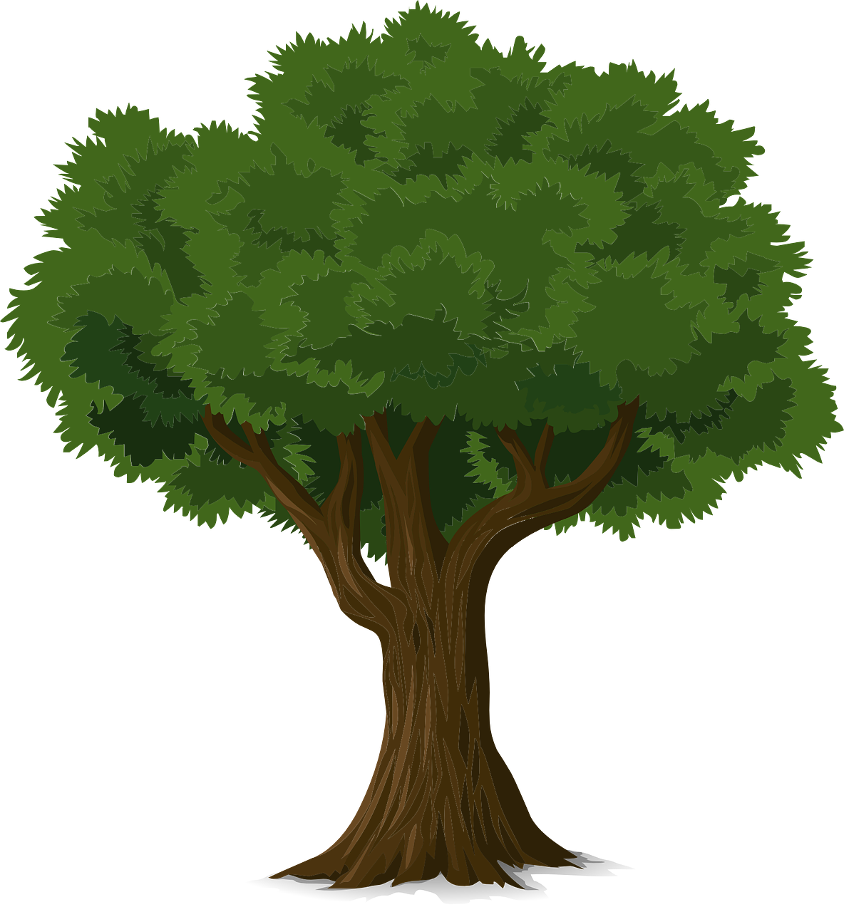 Forest, Tree Forest Trunk Nature Leaves Branches O #forest, #tree.
