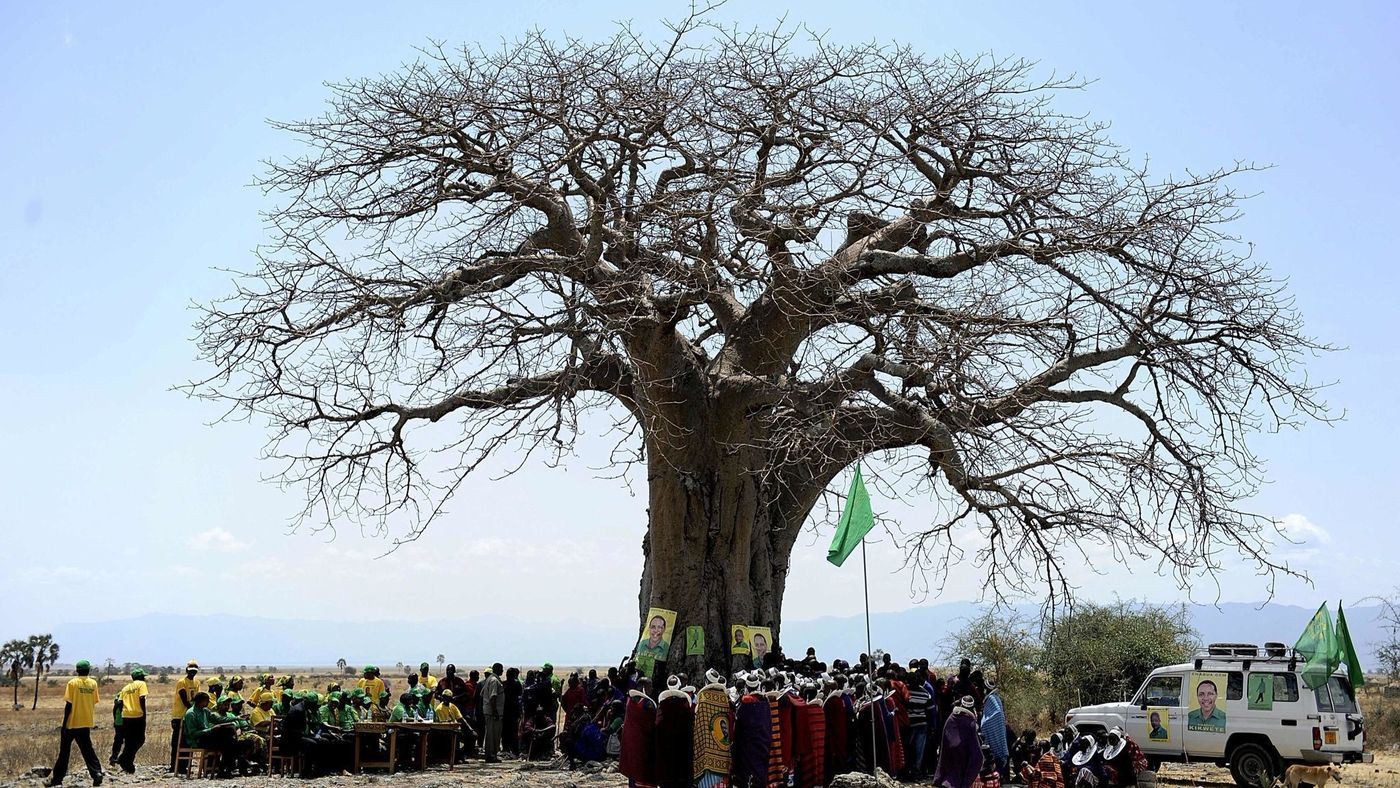 Tree Picture 20 Pictures Images HD Download Free Photos On Unsplash.