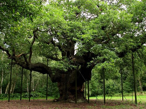1000+ ideas about Oak Tree on Pinterest.