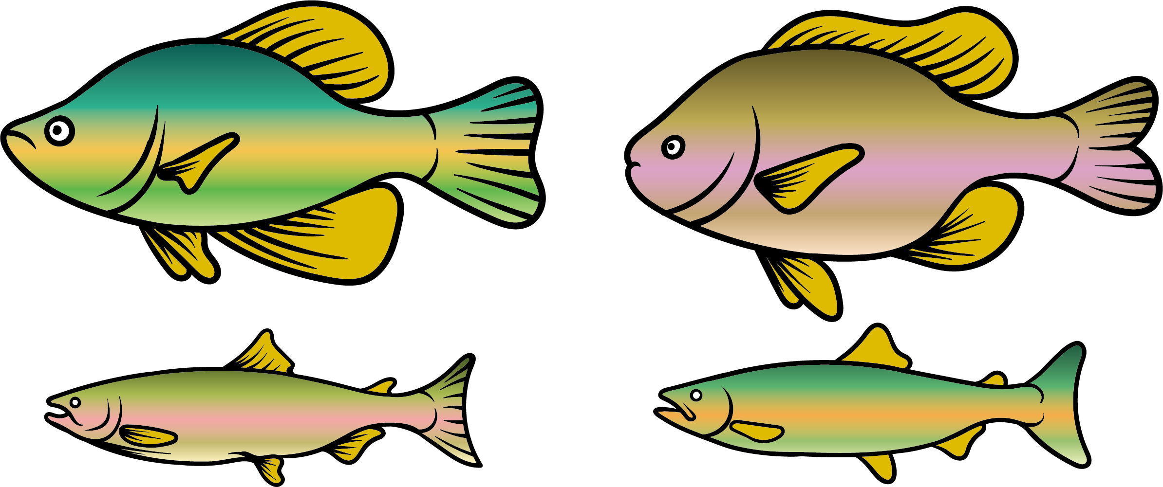Rainbow trout Fish Clip art.