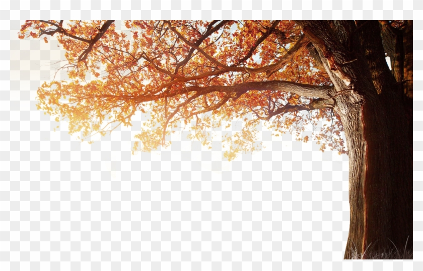 Winter Resolution Wallpaper Tree Autumn 4k Fall Clipart.