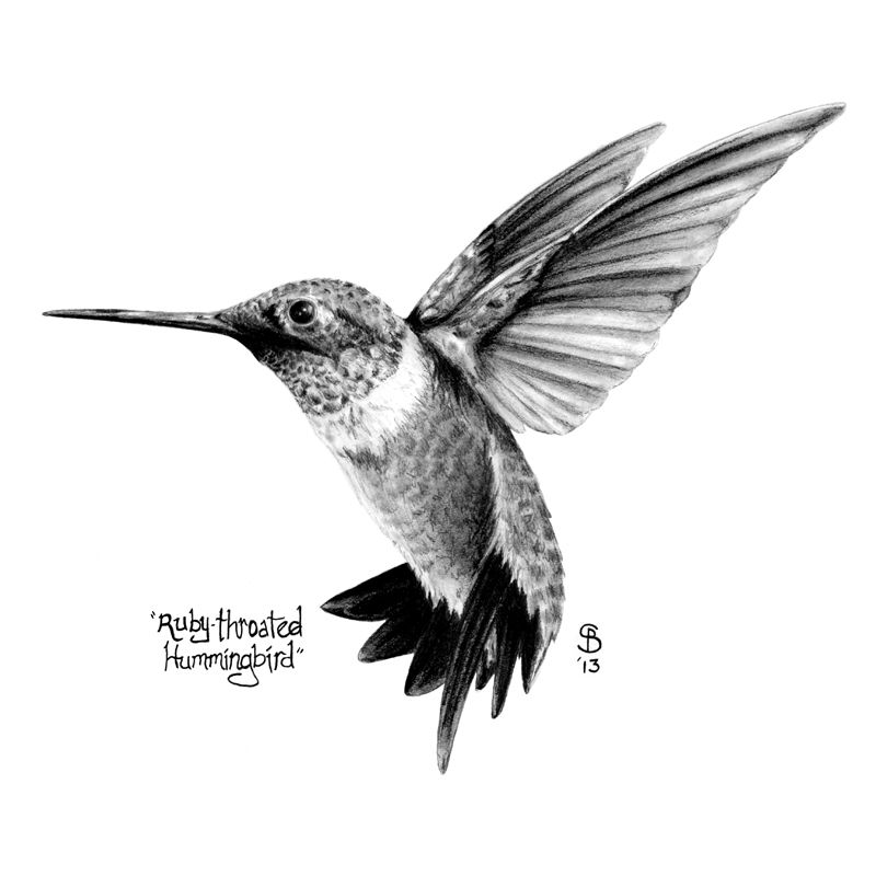 10mb jpg of hummingbird clipart clipart images gallery for.