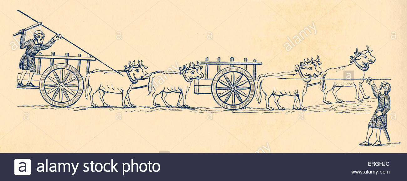 Carts Being Pulled By Oxen In 11th Century England. 19th Century.
