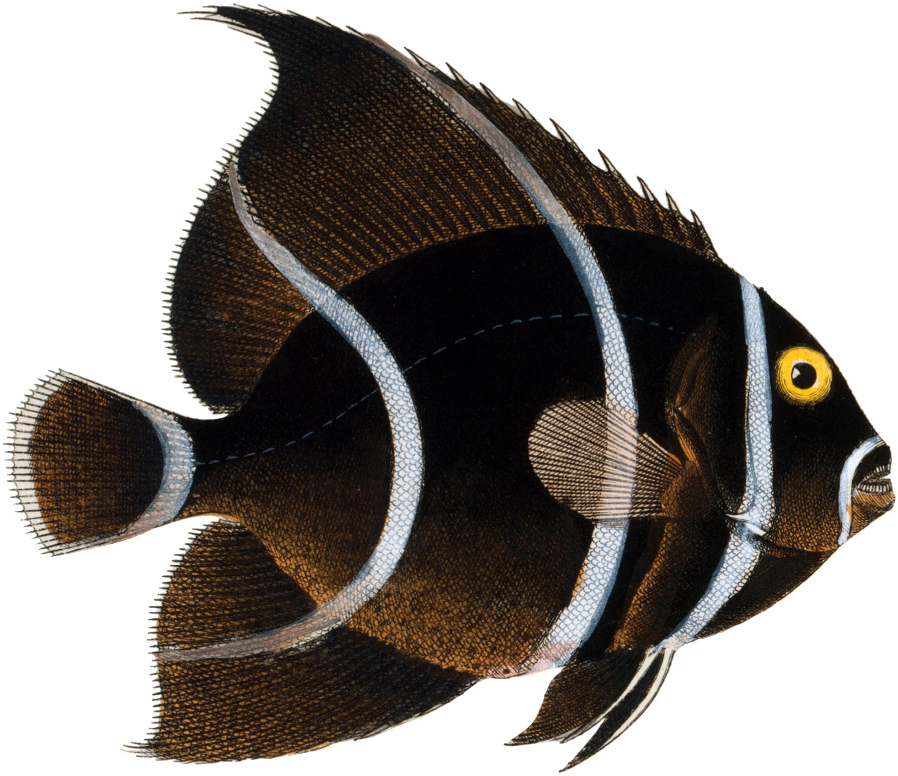 11 Free Fish Clipart !.
