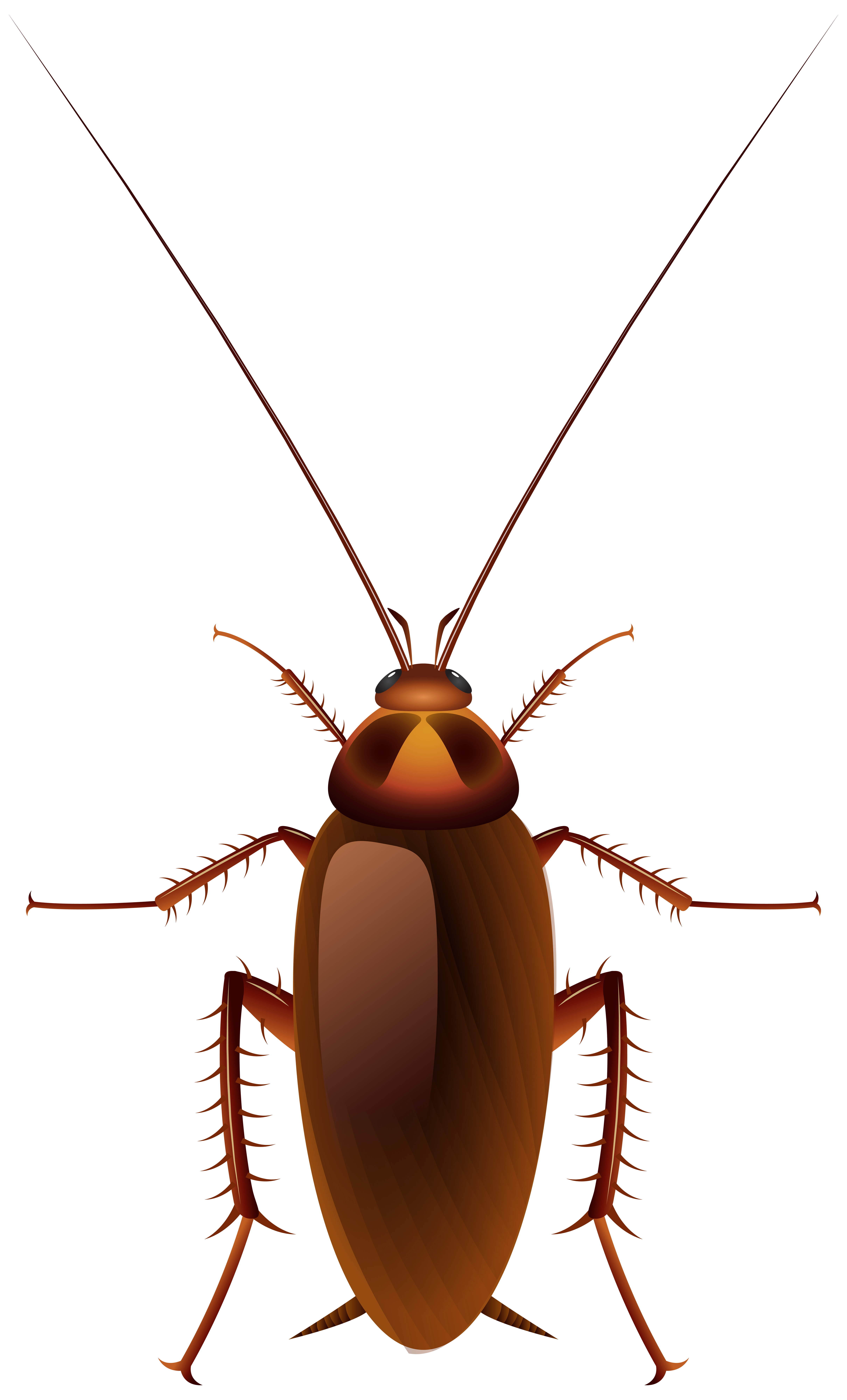 Cockroach transparent clipart library :: Download 13 free.