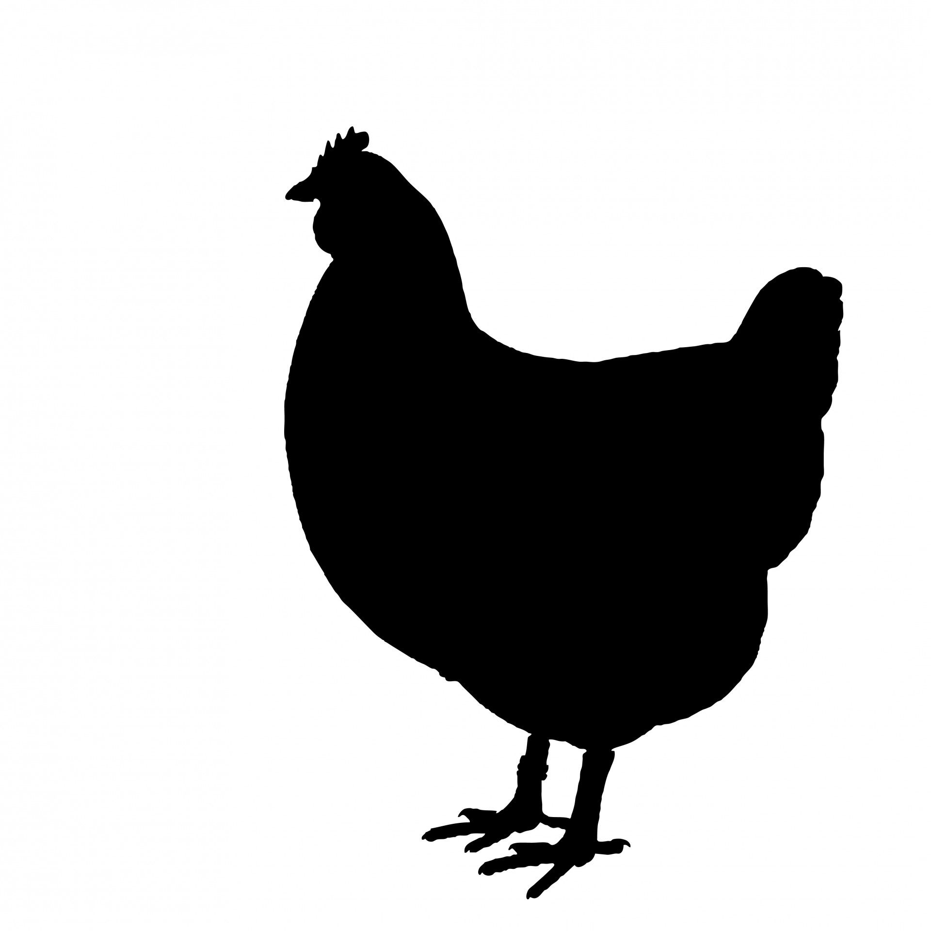 Chicken Silhouette Clipart Free Stock Photo.