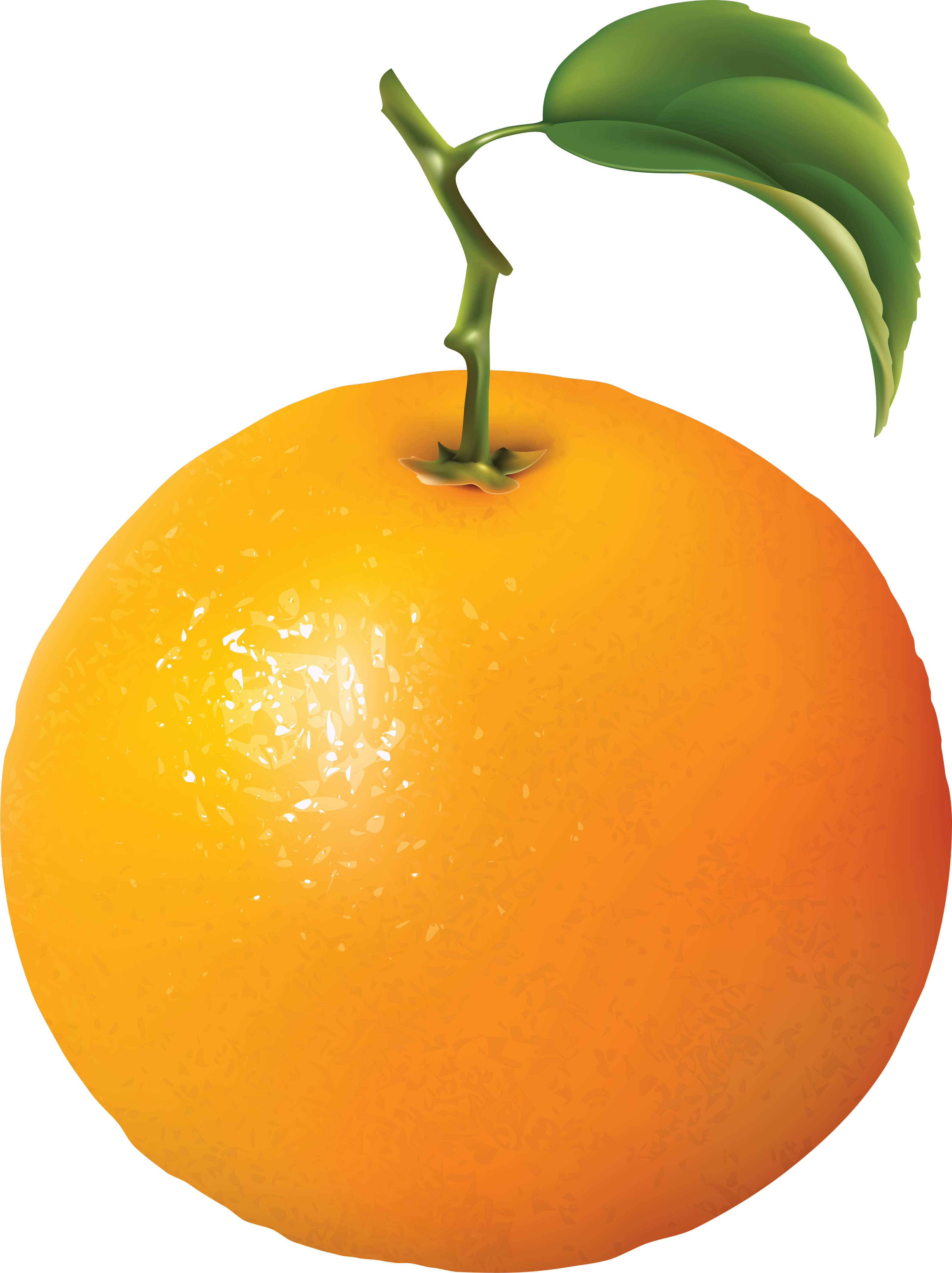 13 oranges clipart clipart images gallery for free download.