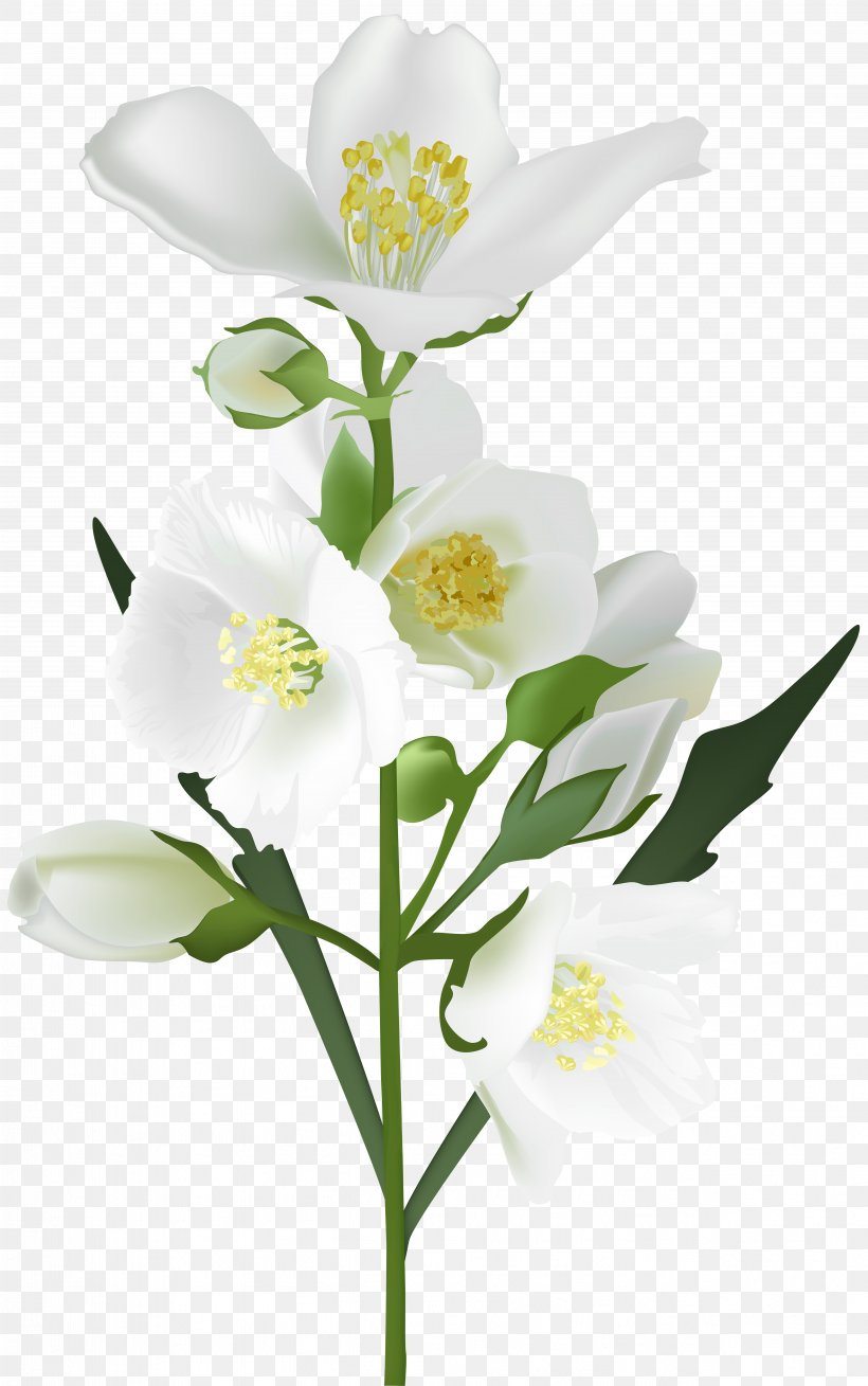 Flower White Clip Art, PNG, 5009x8000px, Flower, Arum Lily.