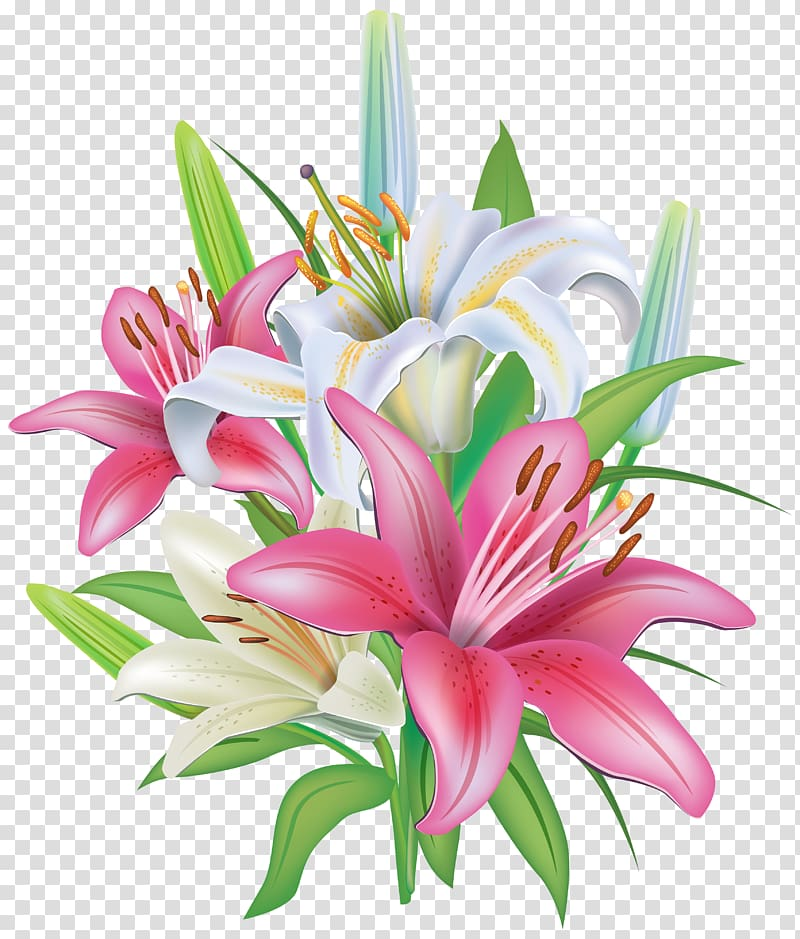 White and pink flowers illustration, Lilium \\\'Stargazer.