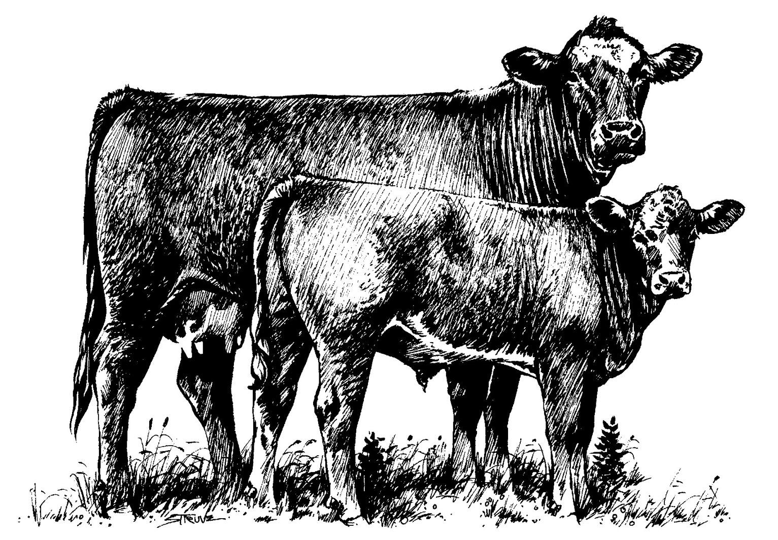 Angus Beef Clip Art.