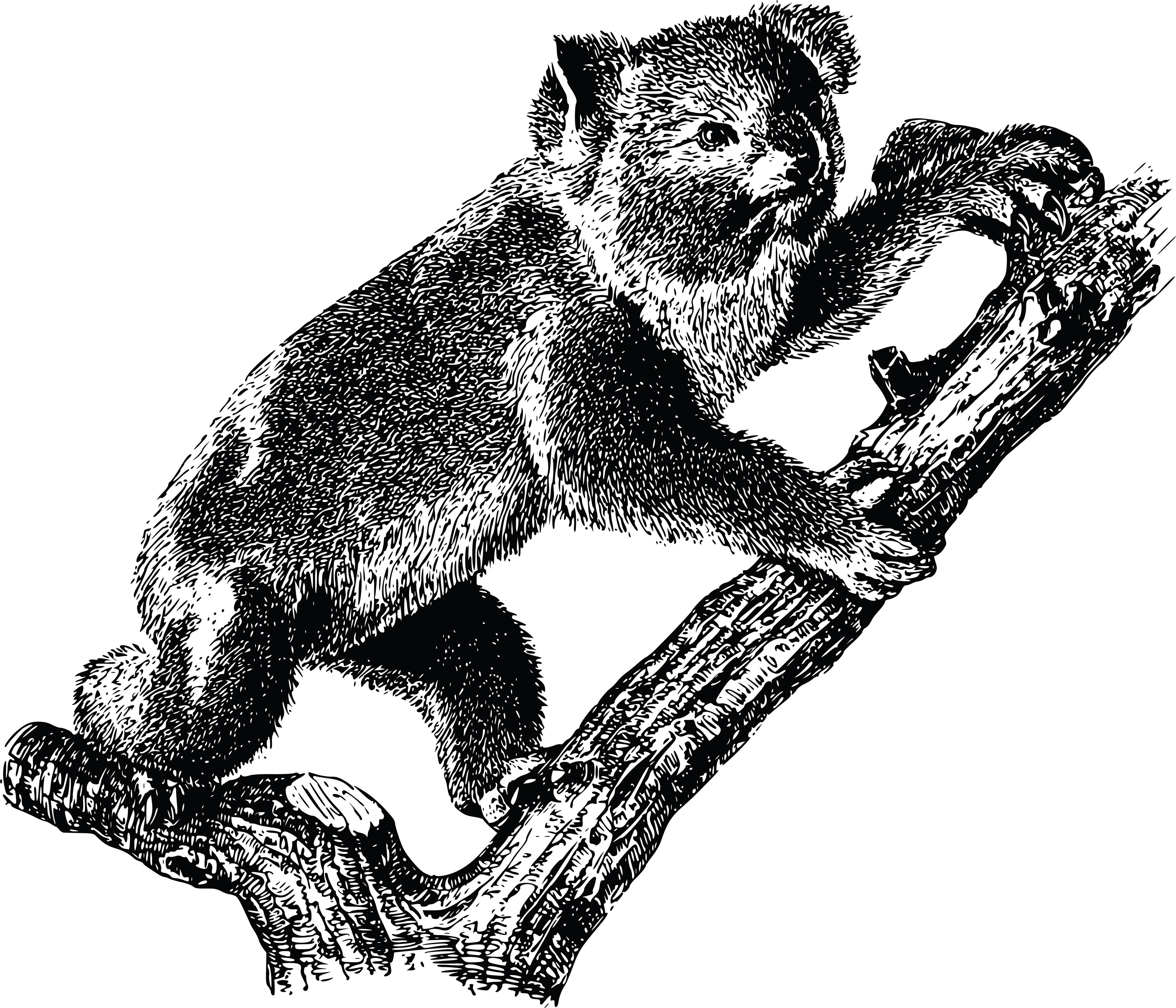 Free Clipart Of A koala.