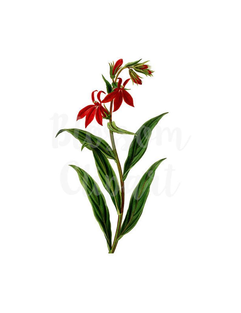 Flower Clipart PNG Illustration Clipart Flower Digital.