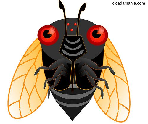 Cute Cicadas.