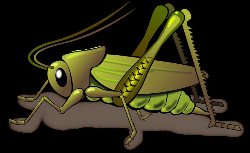 530 Grasshopper free clipart.