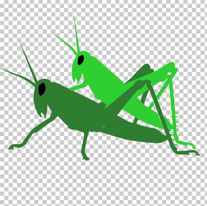 Grasshopper Locust Pest PNG, Clipart, Antagonist, Biological.