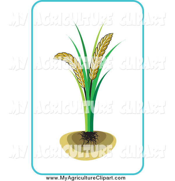 Vector Agriculture Clipart of a Wheat Plant by Lal Perera.