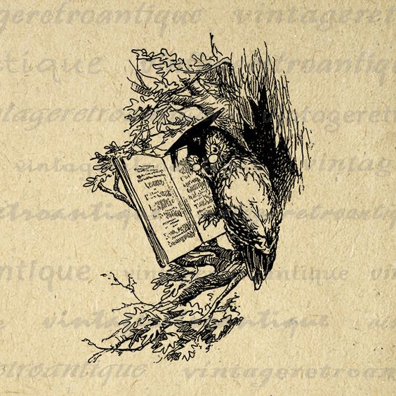 Digital Wise Owl Image Graphic Bird Printable Illustration.