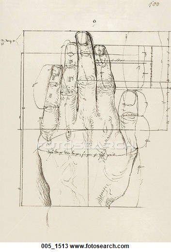 Art of Anatomy: 1513.