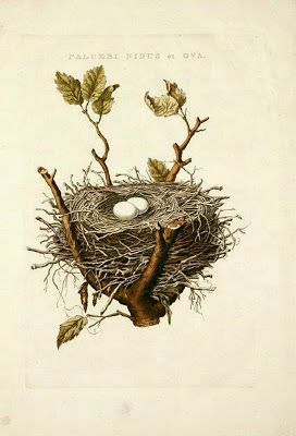 The Vintage Moth..: Lovely free clipart nest with eggs, and 1887.