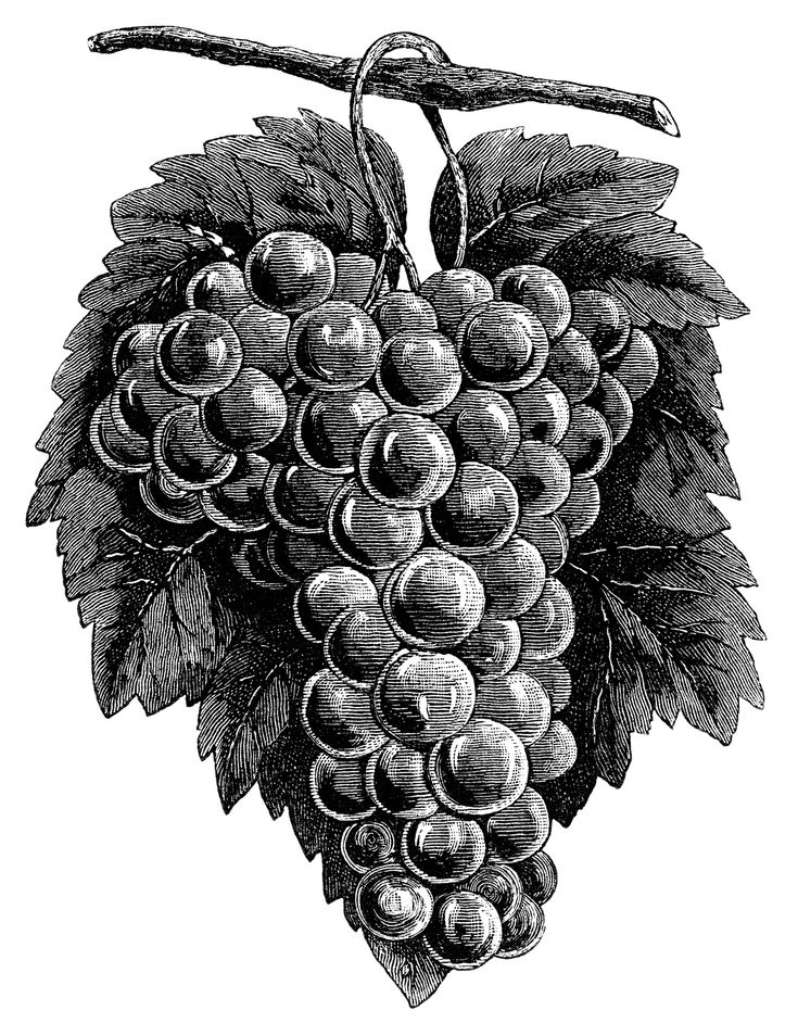 10 Best images about Wine on Pinterest.
