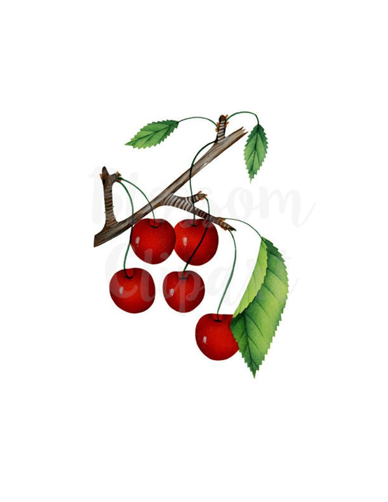 Cherries Clip Art Cherry PNG Vintage Graphic PNG Clipart.