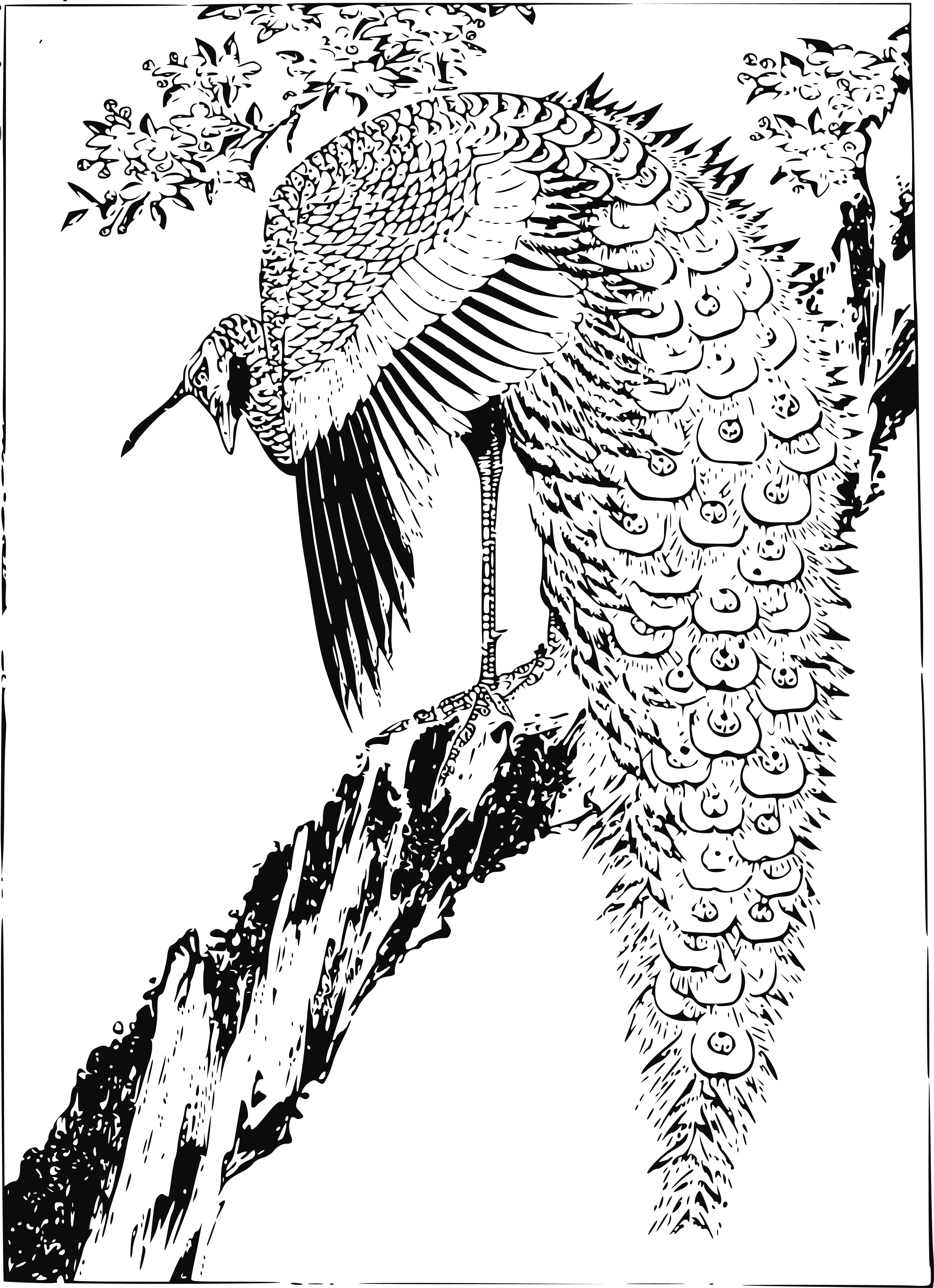 Free Clipart Of A peacock.