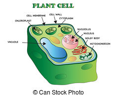 Plant cell Illustrations and Clip Art. 1,958 Plant cell royalty.