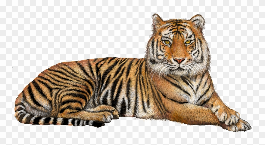 1970s tiger no background clipart clipart images gallery for.