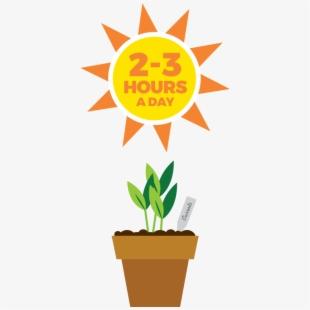 Sunlight Clipart Sunlight Plant.