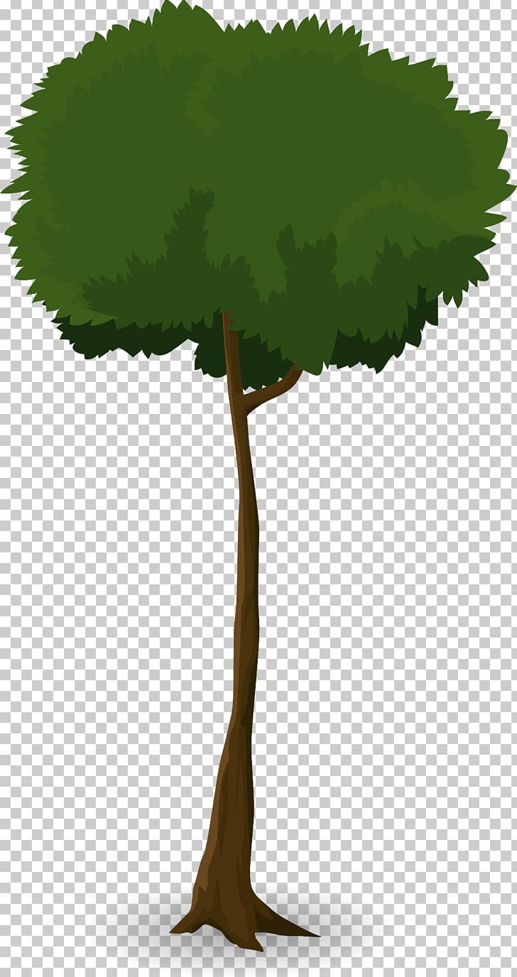 Tree Leaf Trunk Canopy Plant PNG, Clipart, Arecaceae, Branch.