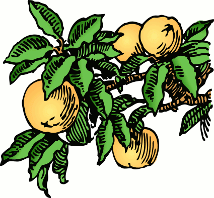 Free peach clipart 1 page of clip art.