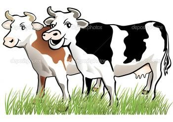 Two cows are standing in a field extremely close together.