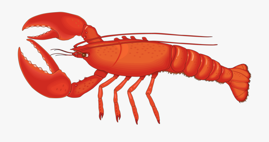 Crawfish Vector Spiny Lobster.